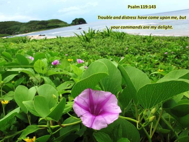 Psalm119-143